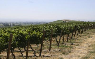 Eternal Wines Featured in International Wine Review!